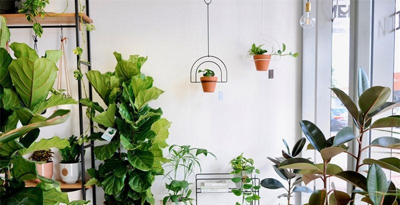 Đặt những loại cây này trong nhà, cuộc sống gia đình vừa tẻ nhạt vừa giảm vận may vì