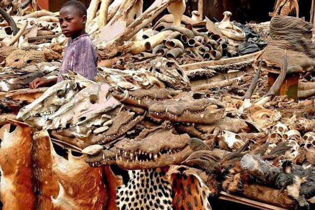 Giải mã bí ẩn bên trong khu chợ bùa ngải lớn nhất thế giới Akodessewa Fetish