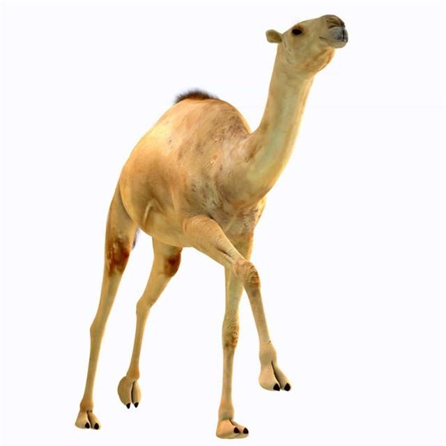 Chân dung những loài động vật thời tiền sử - Ảnh 8