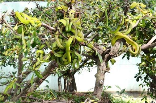 """Gan to lại gần những cây bonsai này, bạn sẽ biết ngay thế nào là """"hồn lìa khỏi xác"""" - 1"""