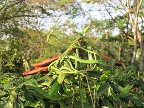 """Gan to lại gần những cây bonsai này, bạn sẽ biết ngay thế nào là """"hồn lìa khỏi xác"""" - 2"""