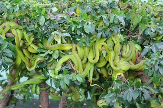 """Gan to lại gần những cây bonsai này, bạn sẽ biết ngay thế nào là """"hồn lìa khỏi xác"""" - 3"""