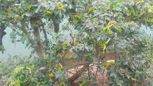 """Gan to lại gần những cây bonsai này, bạn sẽ biết ngay thế nào là """"hồn lìa khỏi xác"""" - 5"""