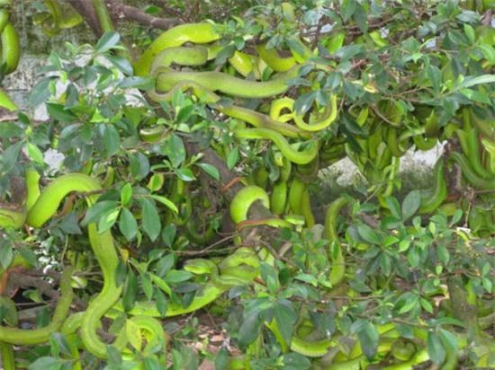 """Gan to lại gần những cây bonsai này, bạn sẽ biết ngay thế nào là """"hồn lìa khỏi xác"""" - 6"""