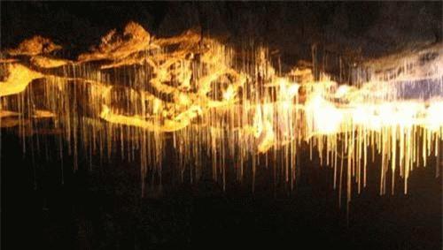 Hang động này còn được gọi là thiên đường đom đóm vì có hàng triệu con đom đóm nhả tơ, chăng tổ trên trần động.