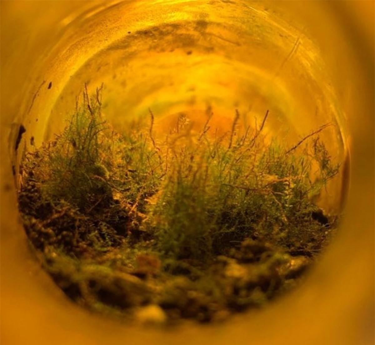 Một thế giới kỳ diệu sinh sôi bên trong chai nước rỗng được tìm thấy trong rừng.