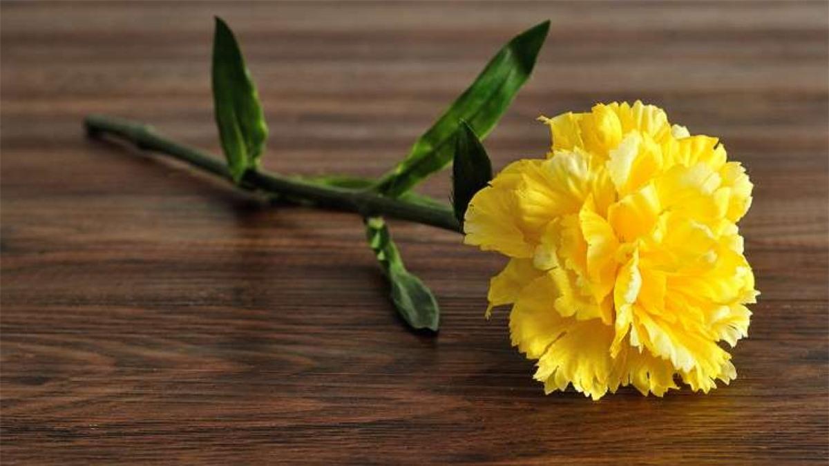 William McKinley (1843-1901): William McKinley, tổng thống thứ 25 của nước Mỹ tin rằng hoa cẩm chướng tượng trưng cho vận may nên ông thường mang theo chúng ở mọi nơi ông đi tới. Ngày 6/9/1901, khi tham dự một sự kiện ở Buffalo, New York, ông đã lấy bông hoa cẩm chướng trên ve áo tặng cho 1 cô bé. Không lâu sau, ông bị một kẻ vô chính phủ dùng súng bắn và qua đời 8 ngày sau đó vì vết thương này.