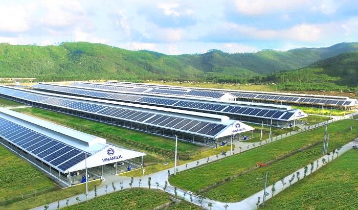 Trang trại bò sữa Vinamilk Quảng Ngãi có quy mô lớn với công nghệ hiện đại và đã được đầu tư hệ thống điện mặt trời từ đầu năm 2021.