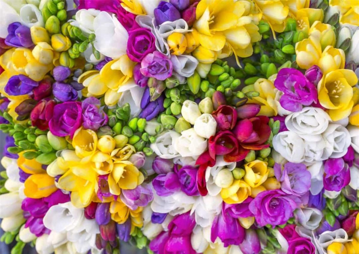 Lan tiên: Loài hoa này tượng trưng cho tình bạn, sự tin tưởng và sự tỉ mỉ.