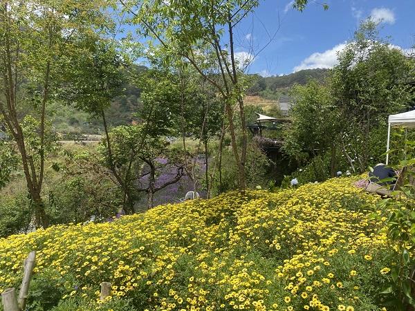 F-Cánh đồng hoa thơ mộng nằm gần đèo Mimosa nổi tiếng.