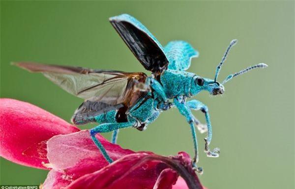 côn trùng bọ đẹp