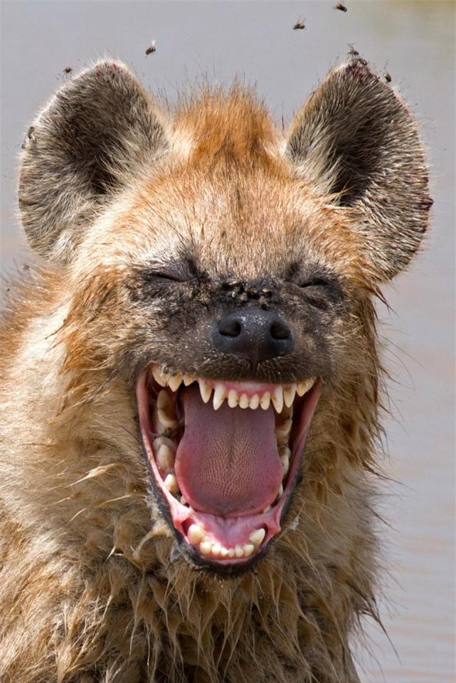 Cười đau bụng với 'Ảnh thiên nhiên hài hước' ảnh 10