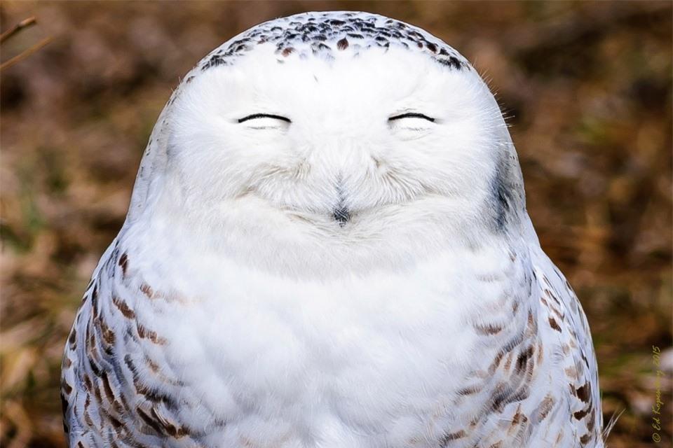Cười đau bụng với 'Ảnh thiên nhiên hài hước' ảnh 15
