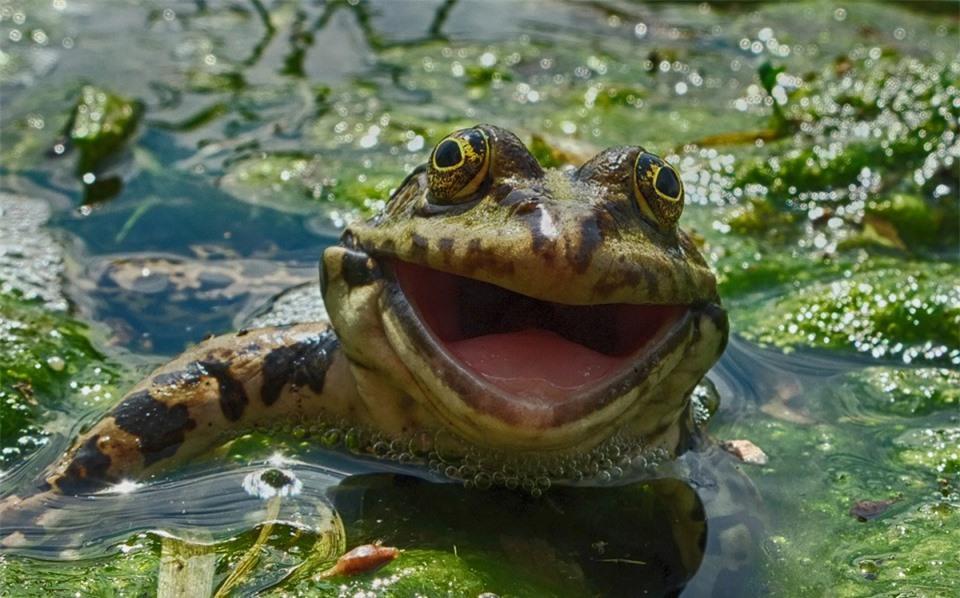 Cười đau bụng với 'Ảnh thiên nhiên hài hước' ảnh 25