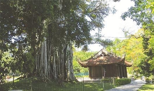 5-cay-khong-trong-truoc-cua-nha-phong-thuy-phunutoday-044