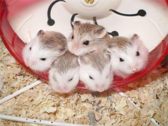 """6 động vật dễ thương là """"quái thú"""" ăn thịt đồng loại"""