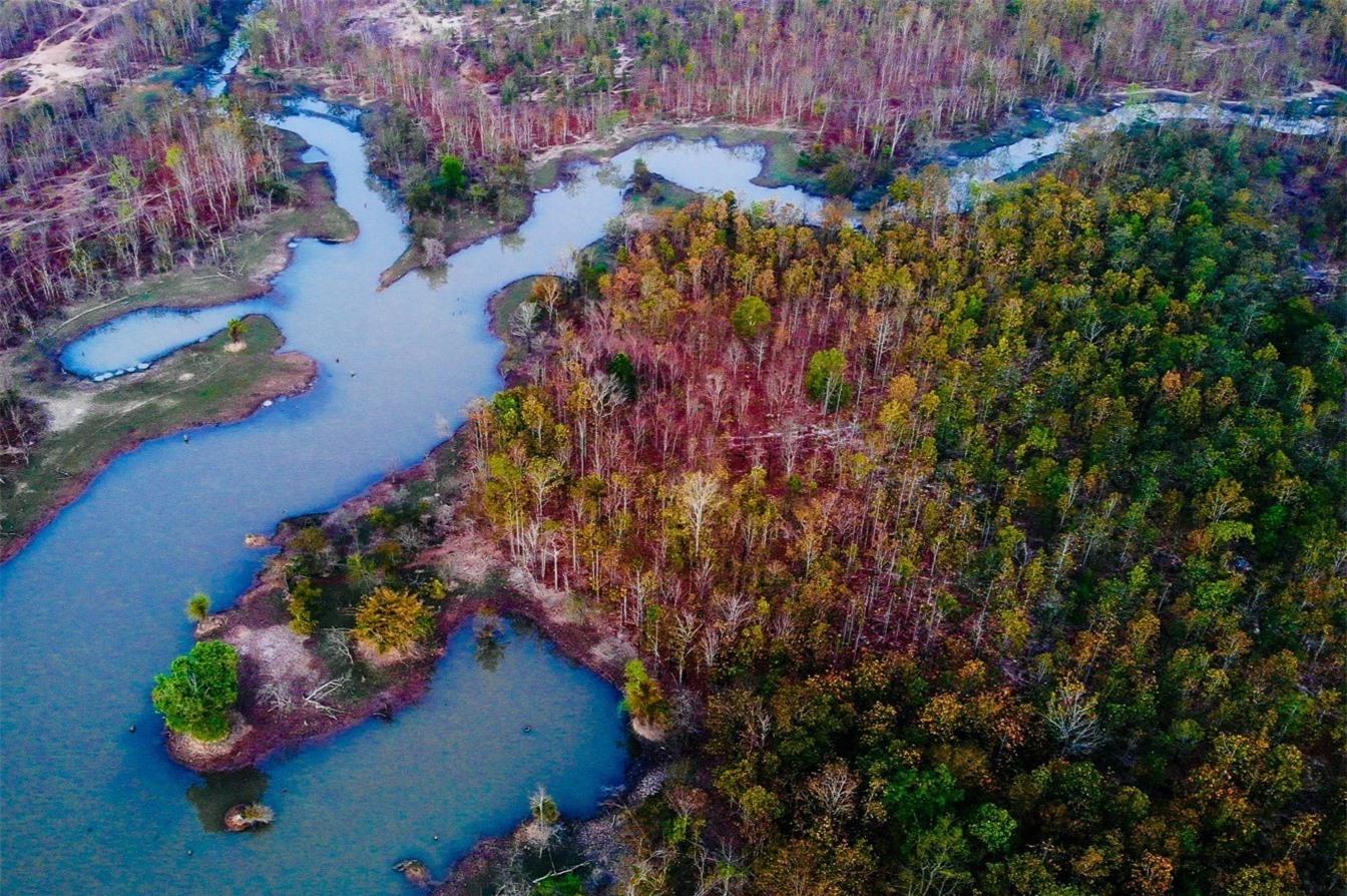 Khu rừng đẹp tựa trời Âu ở Bản Đôn - Ảnh 1.