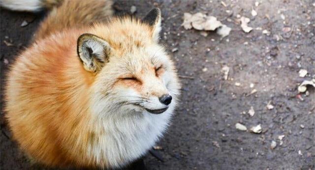 'Tan chảy' trước những hòn đảo thiên đường của động vật ở Nhật Bản - Ảnh 1.