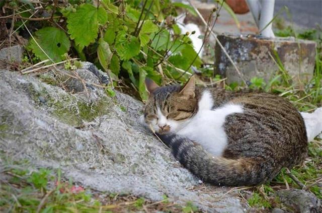 'Tan chảy' trước những hòn đảo thiên đường của động vật ở Nhật Bản - Ảnh 3.