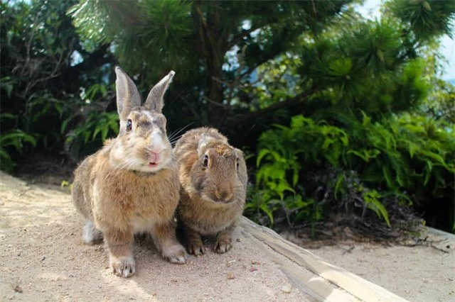 'Tan chảy' trước những hòn đảo thiên đường của động vật ở Nhật Bản - Ảnh 6.