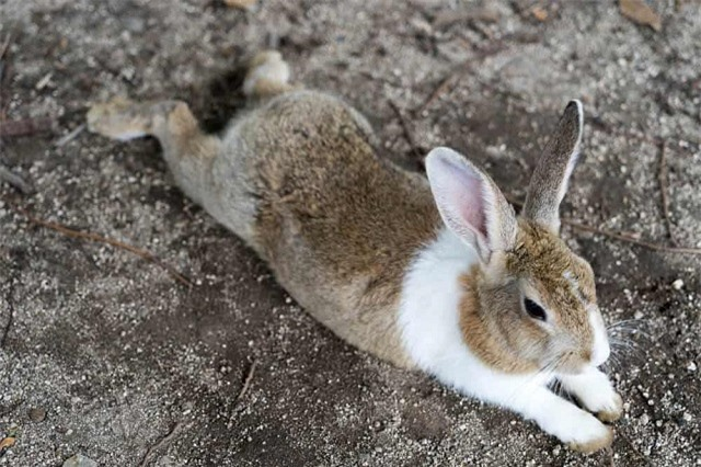 'Tan chảy' trước những hòn đảo thiên đường của động vật ở Nhật Bản - Ảnh 8.