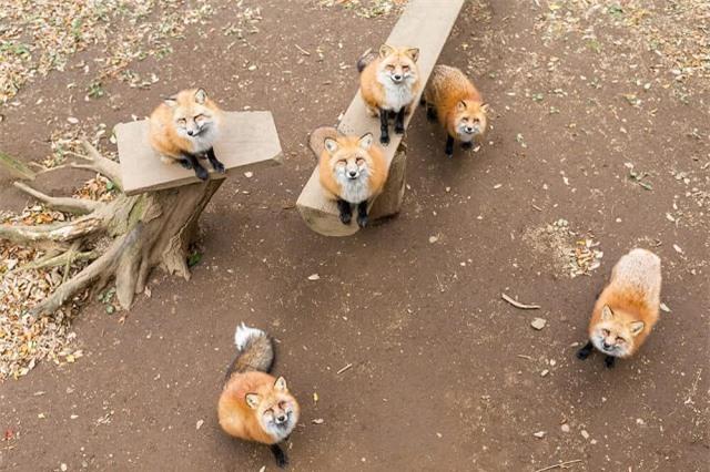'Tan chảy' trước những hòn đảo thiên đường của động vật ở Nhật Bản - Ảnh 9.
