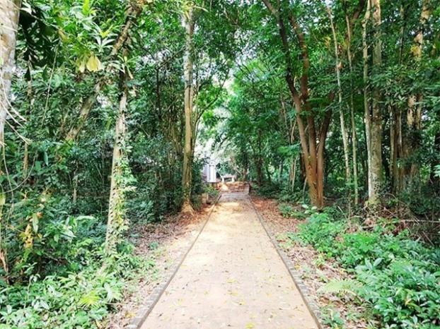 Đường lên đền cây cối xanh mướt.