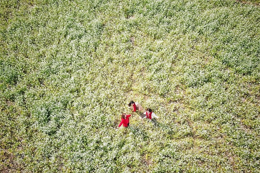 Cánh đồng hoa ngút ngàn đẹp như tranh vẽ ở Sò Lườn - Ảnh 8.