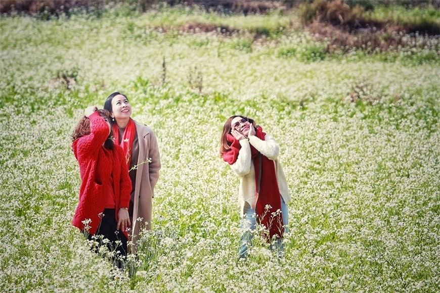 Cánh đồng hoa ngút ngàn đẹp như tranh vẽ ở Sò Lườn - Ảnh 9.