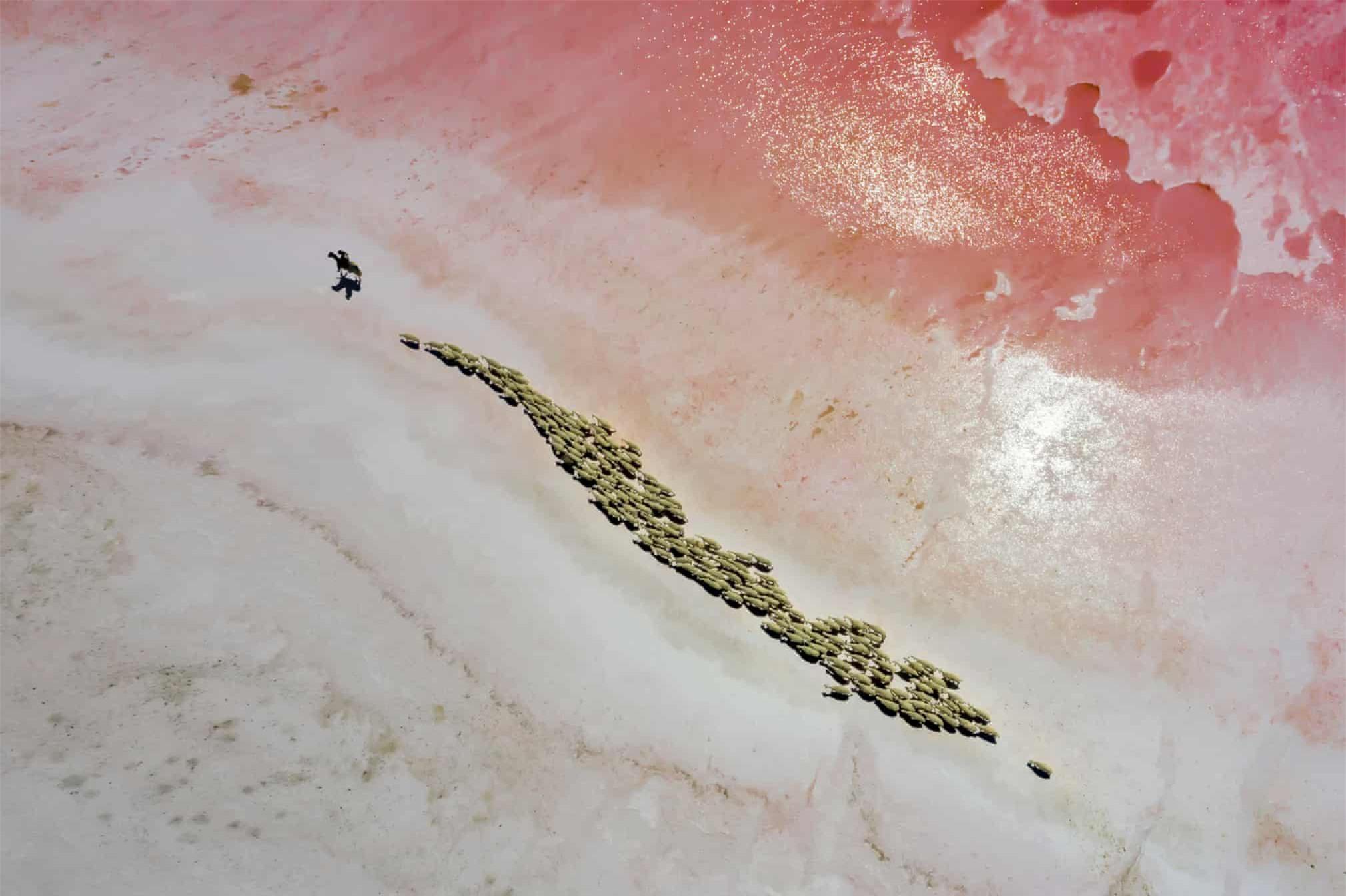 Cảnh phơi cá ở Việt Nam vào top ảnh đẹp thế giới - Ảnh 2.