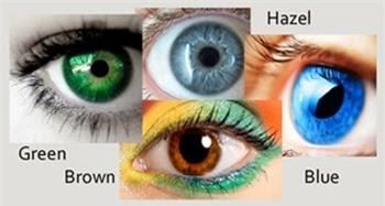 Tại sao con người lại có mắt màu xanh? - 3