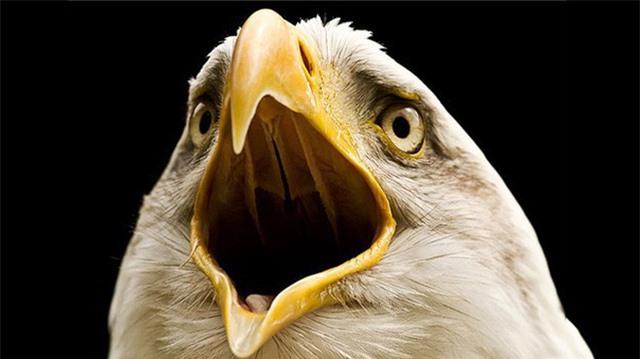 Vì sao các loài chim lại không có răng: Câu trả lời thú vị đến bất ngờ! - Ảnh 2.