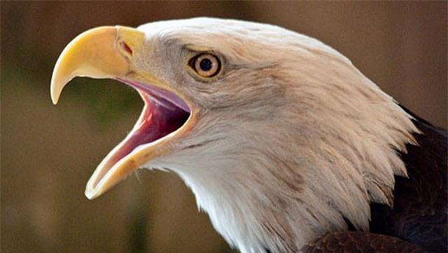 Vì sao các loài chim lại không có răng: Câu trả lời thú vị đến bất ngờ! - Ảnh 3.