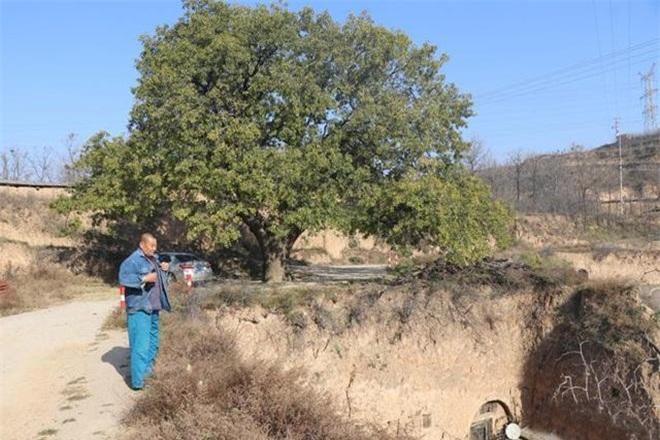 Bí ẩn cây cổ thụ 400 năm, chữa được nhiều bệnh cho dân làng ảnh 4