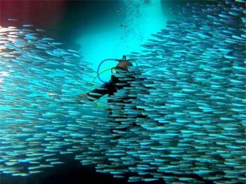 Khám phá thế giới đại dương qua ảnh - 3