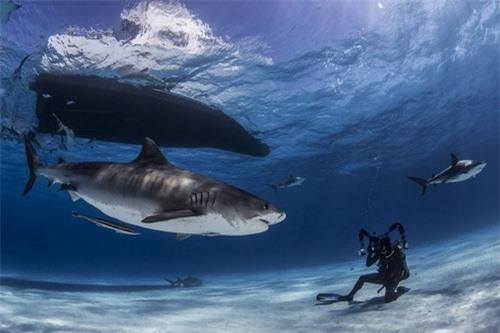Khám phá thế giới đại dương qua ảnh - 4