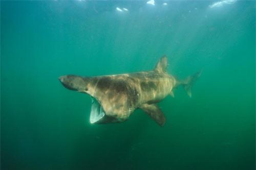 Những hình ảnh đẹp nhất về các loại cá mập, sát thủ đại dương (phần 1) - 2
