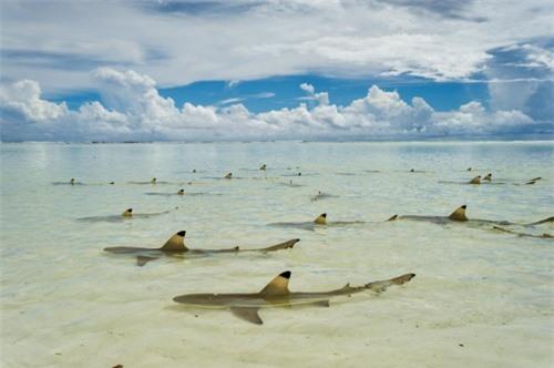 Những hình ảnh đẹp nhất về các loại cá mập, sát thủ đại dương (phần 1) - 3