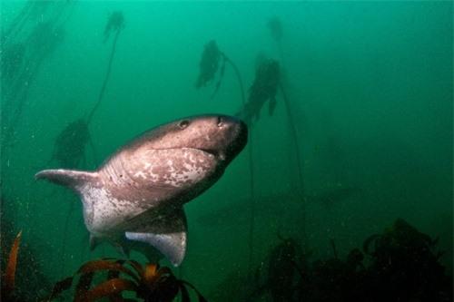 Những hình ảnh đẹp nhất về các loại cá mập, sát thủ đại dương (phần 1) - 5