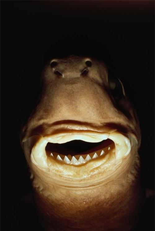 Những hình ảnh đẹp nhất về các loại cá mập, sát thủ đại dương (phần 1) - 8