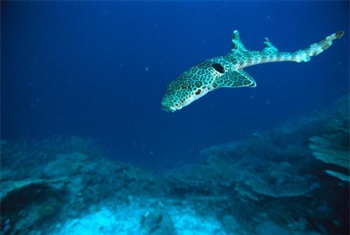 Những hình ảnh đẹp nhất về các loại cá mập, sát thủ đại dương (phần 1) - 9