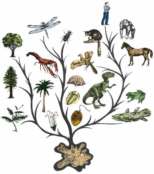 Vì sao sự tiến hóa khiến cho sinh vật thông minh hơn? - 1
