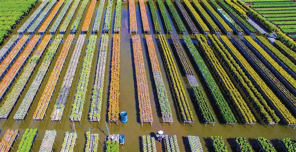 Diện tích trồng hoa khoảng 85 ha, làng hoa Sa Đéc có tới khoảng 2.000 loài hoa khác nhau và gần 2.000 hộ dân làm nghề, đóng góp phần lớn trong giá trị sản xuất ngành nông nghiệp của thành phố Sa Đéc
