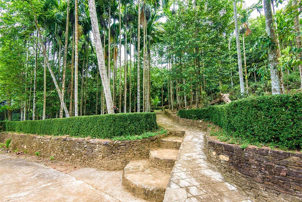 Lối vào một ngôi nhà cổ ở Lộc Yên sâu hun hút với lối đi bằng đá ẩn mình bên hàng cau cao vút