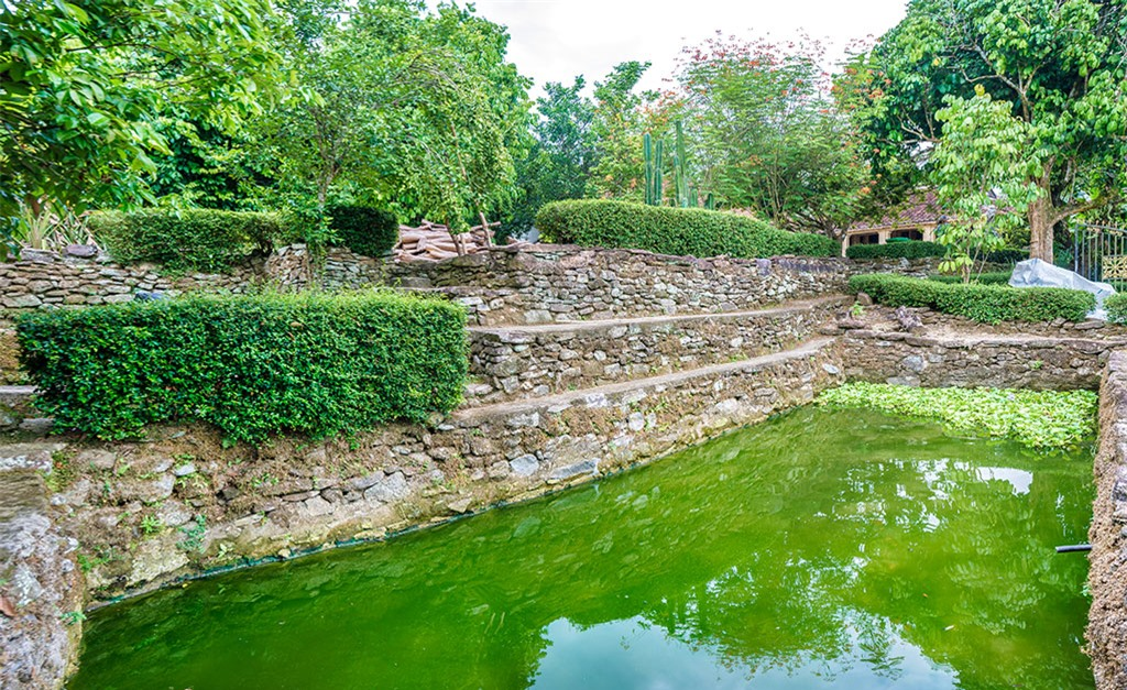 Một hồ cá nằm trong khuôn viên nhà cổ