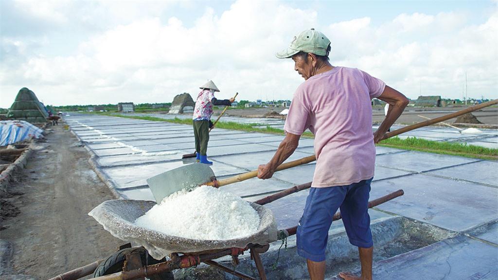 Không quản ngại trời nắng gắt, trên từng thửa ruộng trồng muối, những chiếc lưng oằn lên, phơi mình trong cái nắng om da để chờ đợi thành quả lao động của mình