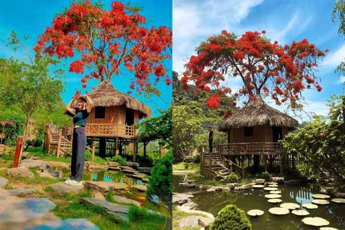 """Phượng mọc giữa nhà gỗ, hồ sen nở rộ gây sốt ở """"thánh địa sống ảo"""" ở Ninh Bình"""