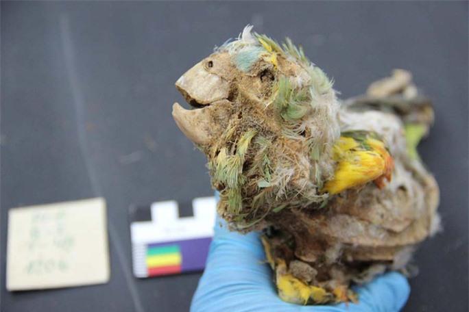 Bí ẩn 27 xác ướp không phải con người, đầy màu sắc ở nghĩa trang 3.500 tuổi - Ảnh 1.