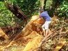 Thừa Thiên Huế vẫn nóng tình trạng phá rừng