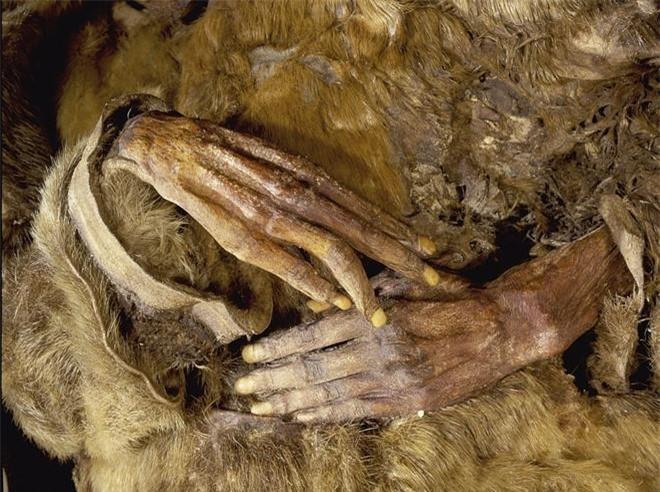 Các xác ướp được băng tuyết bảo quản trong điều kiện khó tin sau gần 500 năm. Ảnh: Rex.